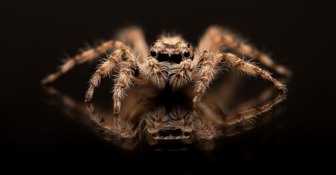 Gift ideas for spider haters - large hairy spider